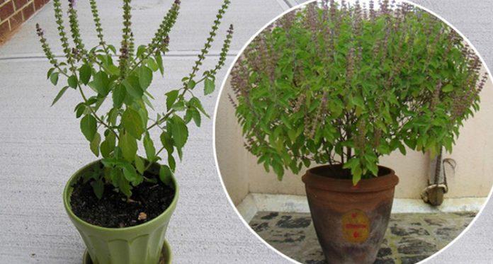 Medicines plants